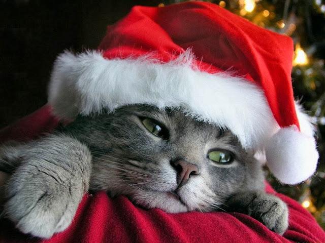 Achtergrond met grijze kat en kerstmuts