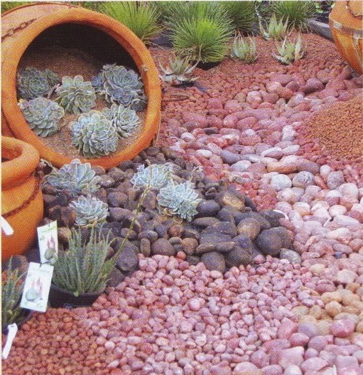 Gardening in africa the wonder of echeverias for Garden design johannesburg
