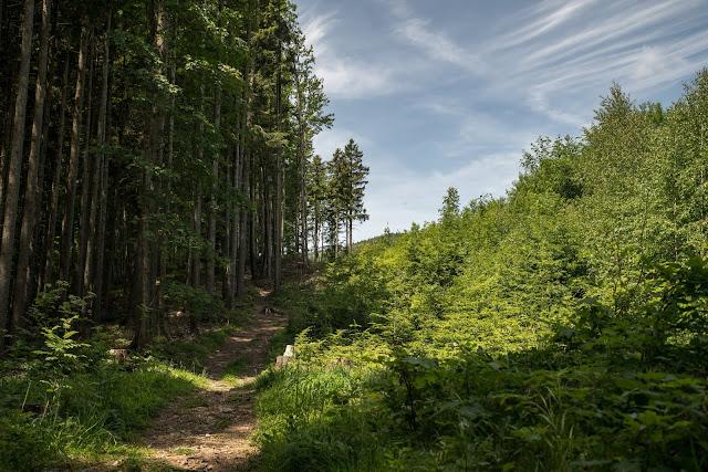 Gaisberg und Nockstein von Koppl  Wanderung FuschlseeRegion  Wandern Salzkammergut 02