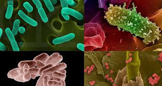 6 Perbedaan Sakit Karena Virus dan Bakteri
