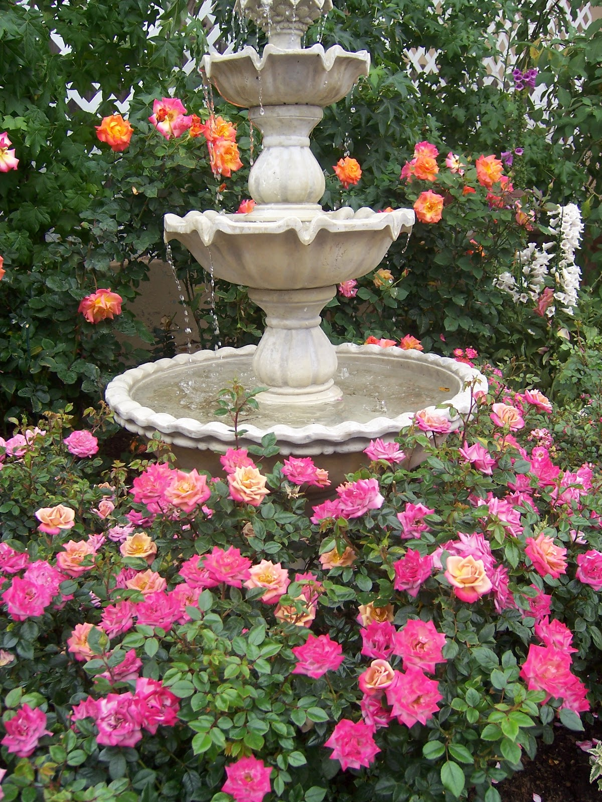 The 2 Minute Gardener: Photo - Roses around a water fountain on Backyard Landscaping Near Me id=72443
