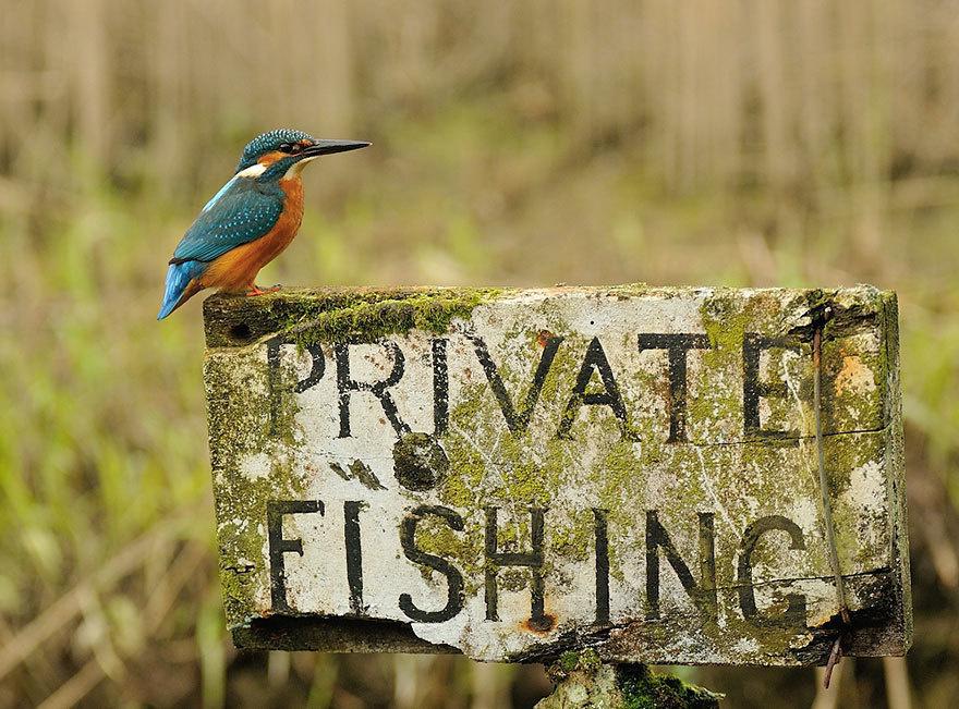 the perfect kingfisher photo