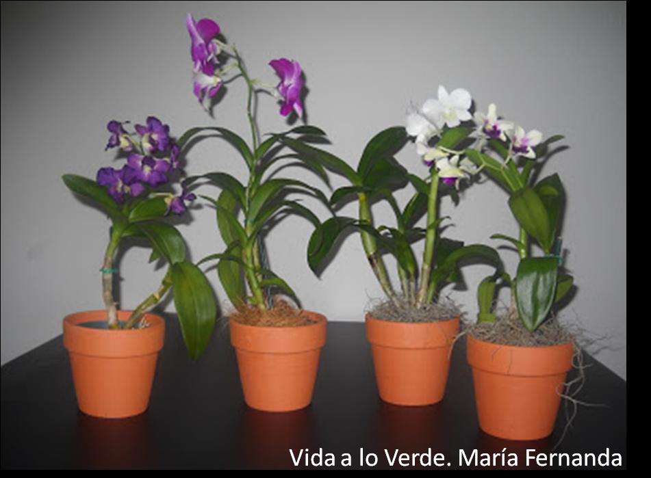 Manual Práctico Ilustrado para el Cultivo de Orquídeas en Macetas. Parte 1