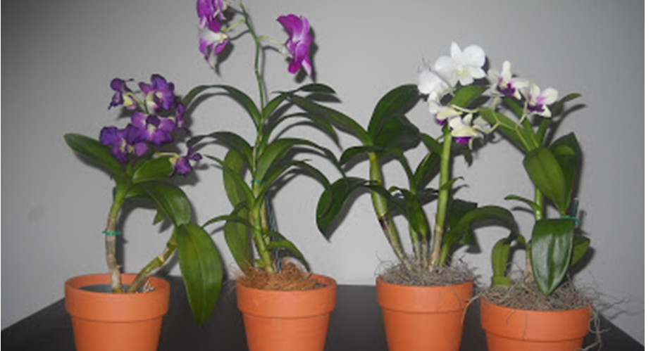 Vida a lo verde living in green manual pr ctico - Como cuidar orquideas en maceta ...