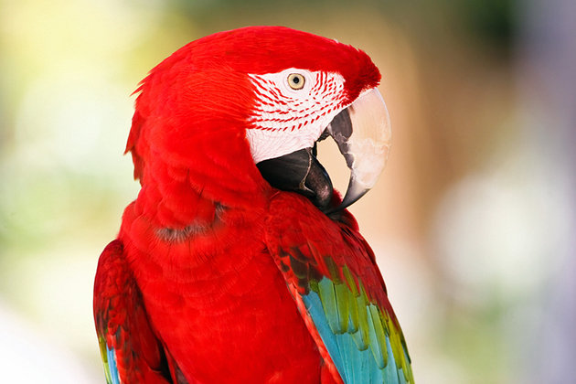 Philip's Animal Garden Aruba