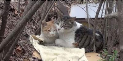 Bikin BAPER, Kucing ini Berkorban Untuk Jaga Teman nya Yang Cacat