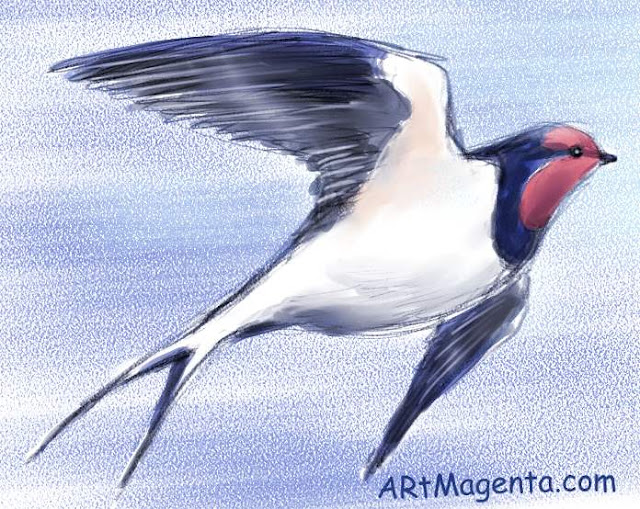 Barn Swallow sketch painting. Bird art drawing by illustrator Artmagenta.