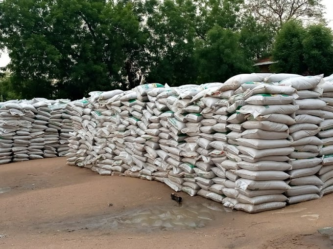 Federal Government palliatives rotting under rain, sun in Kano