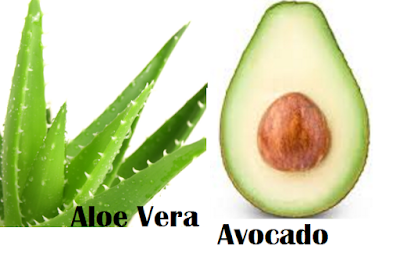 Aloe Vera and Avocado Mask for Dry Skin Best homemade facial masks treatments for dry skin