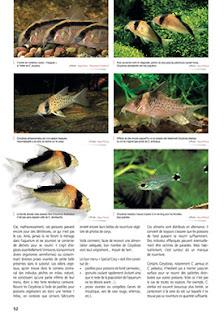 http://www.animalia-editions.com/aquamag/1012-aquamag-n35.html