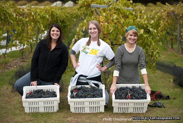 Kerja petik buah di Australia [2]