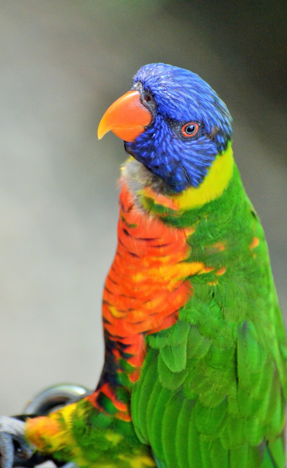 Picture of a beautiful parakeet.