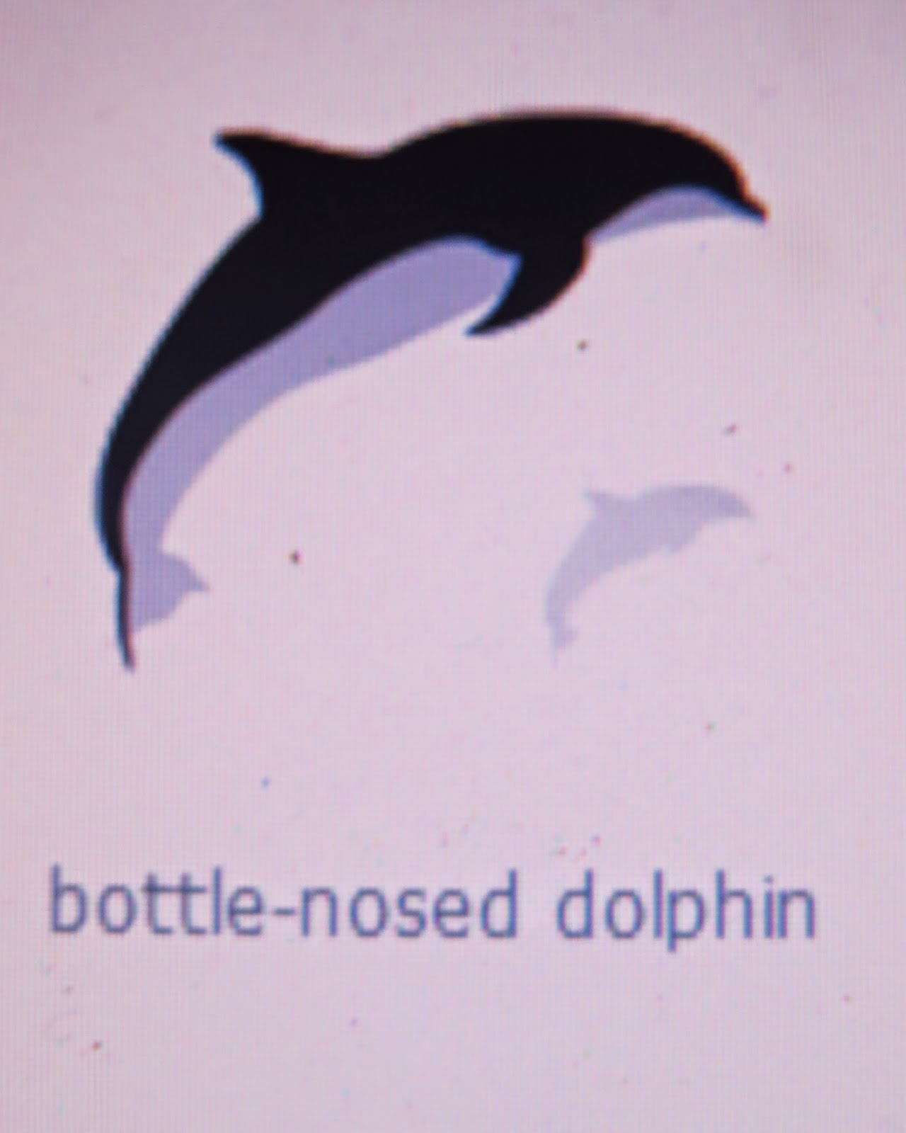 Dolphin, Silhouette Cameo, silhouette design, August Silhouette Challenge