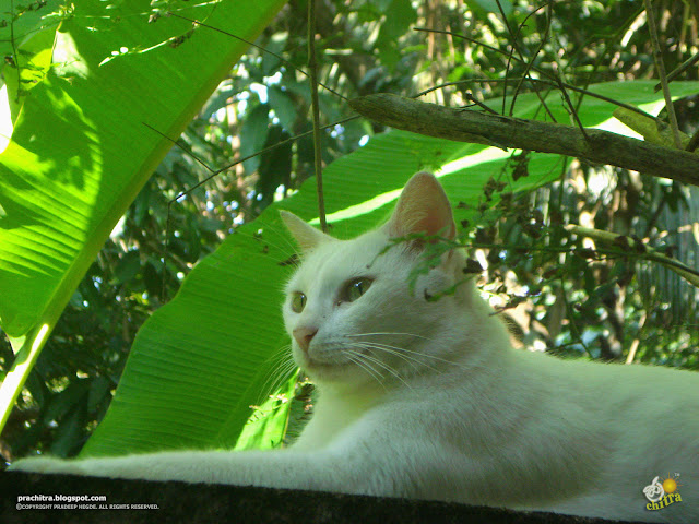 Me cat, love the nature - White tabby cat in greenery
