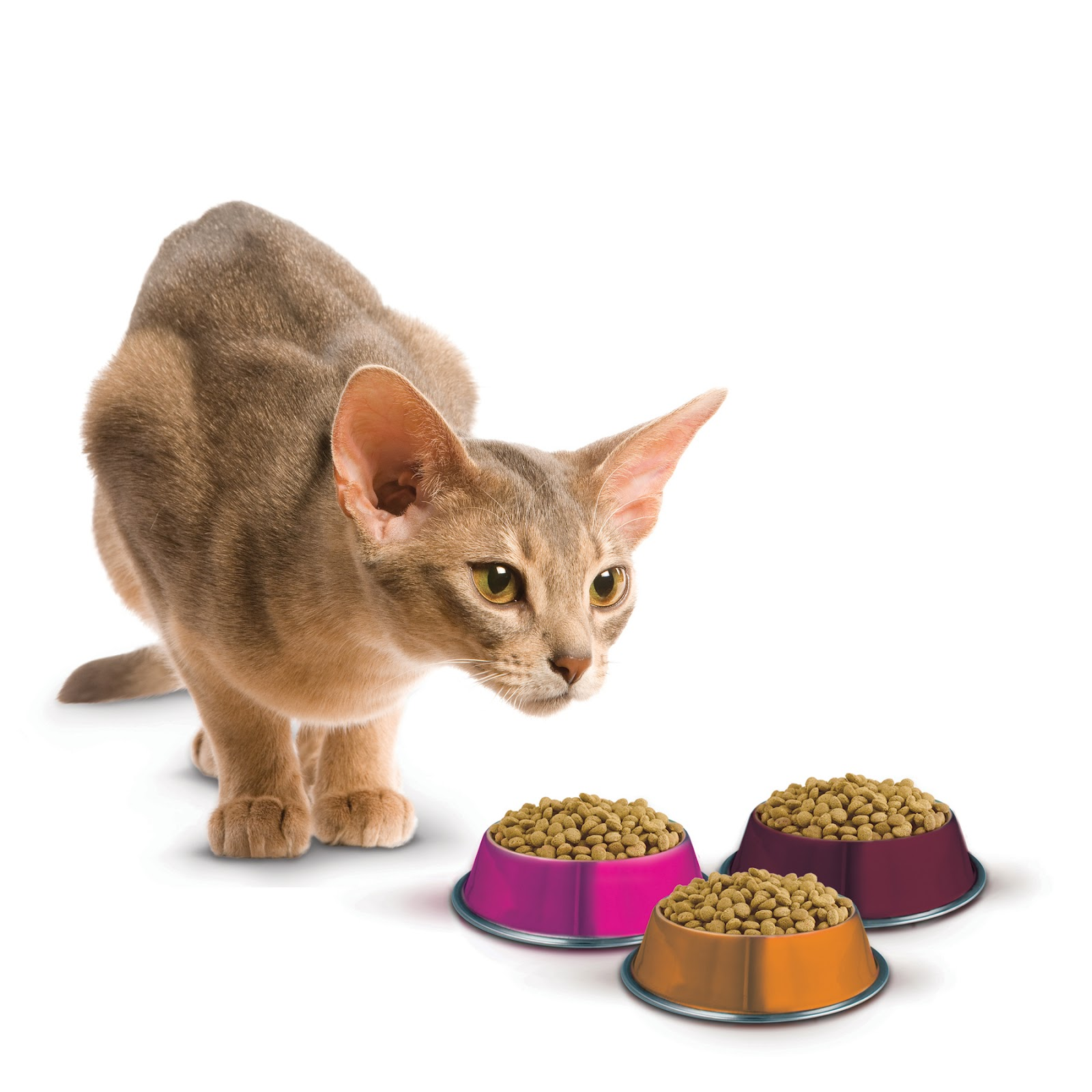Cat Food Companies In Canada