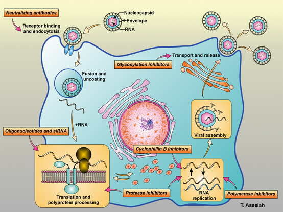 Hcv New Drugs Direct Acting Antivirals For The Treatment