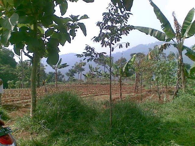 Foto(5087) Jual Tanah | Tanah Di jual, luas 4,25 ha kebun jual tanah di puncak