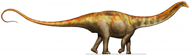New sauropod species described by paleontologists