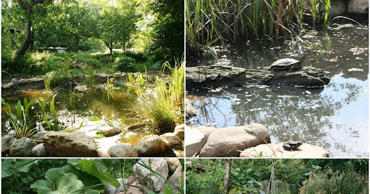 Small Pond Installations for Irrigation and Wildlife - Part 1