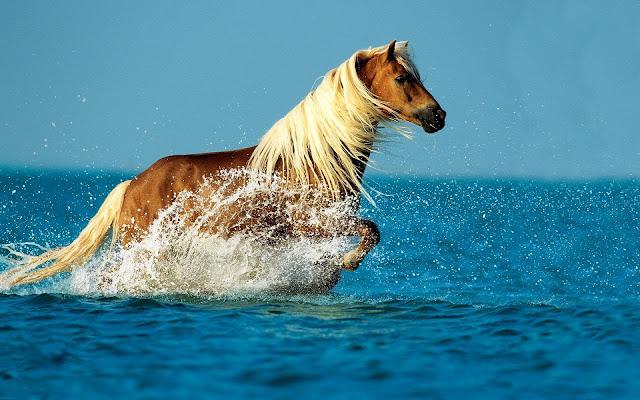 Bruin paard in de zee