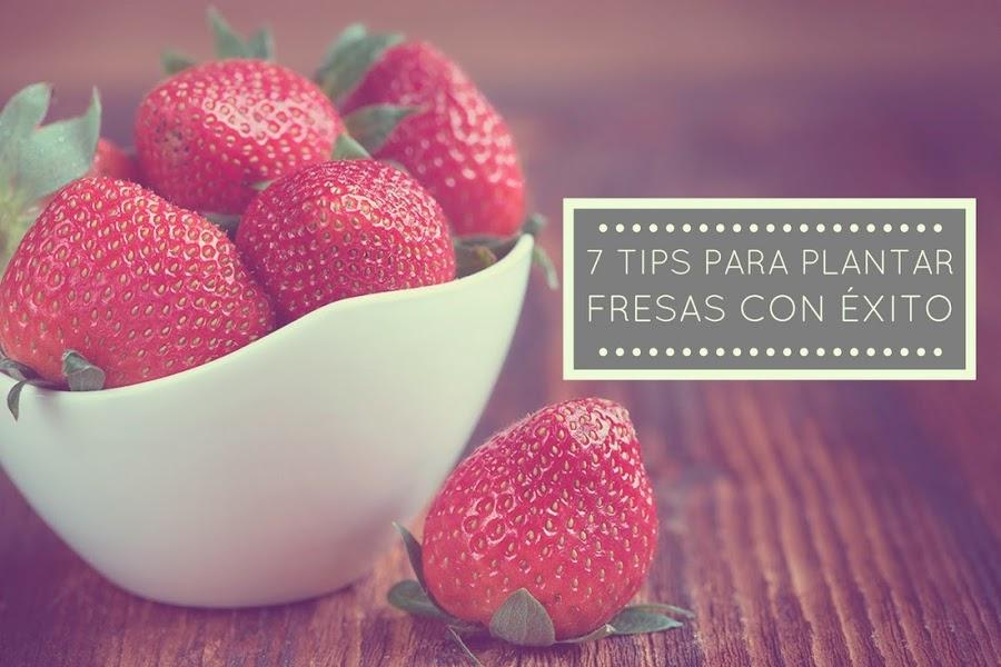 7 tips para plantar fresas con éxito - Punto de Lu