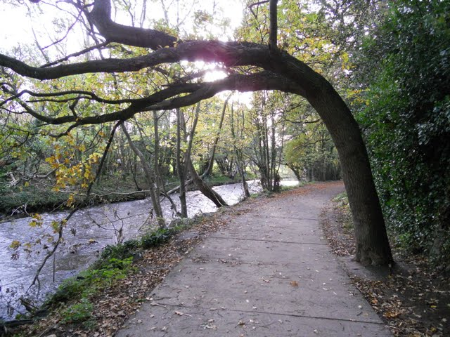 Walk the River Dodder in Dublin - path with bent tree