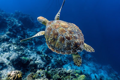 Found a way to protect sea turtles from global warming