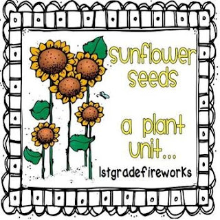 1stgradefireworks sunflower seeds unit