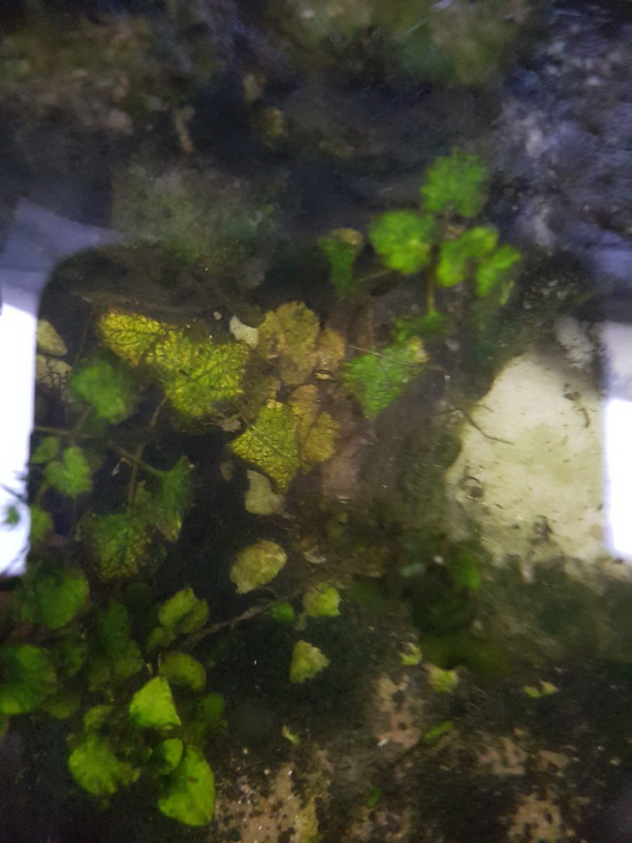 Hồ thủy sinh bị rêu hại rất nặng do không  biết cách chăm sóc