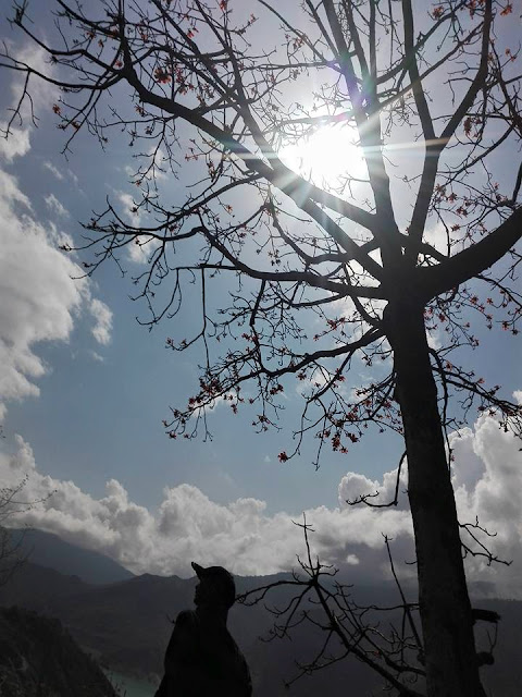 evening time tree of garhwal