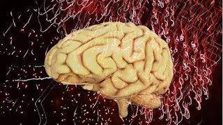 5 ممارسات لتحسين عمل الدماغ وتعزيز الذاكرة