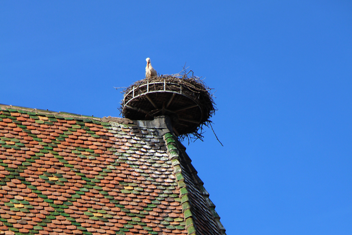 Storch in Colmar
