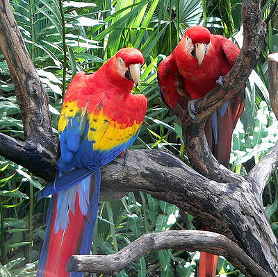 Scarlet Macaw Latest Facts | All Wildlife Photographs