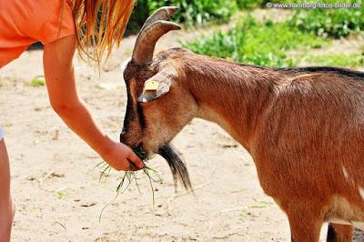 Tiere füttern Gut Wulksfelde