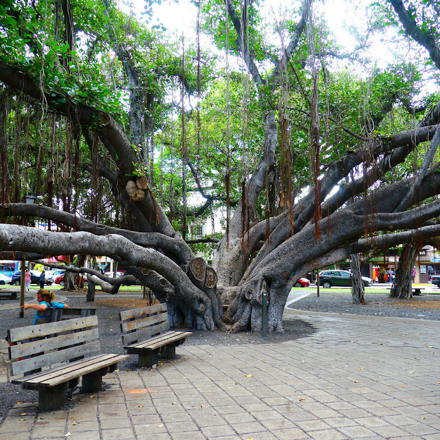 important facts about banyan tree