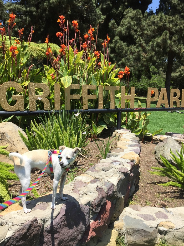 Griffith Park on Monday! - The Trails Cafe, Ferndell, Griffith Observatory