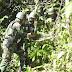 TNI Temukan Ganja Kering di Kampung Bompay Papua