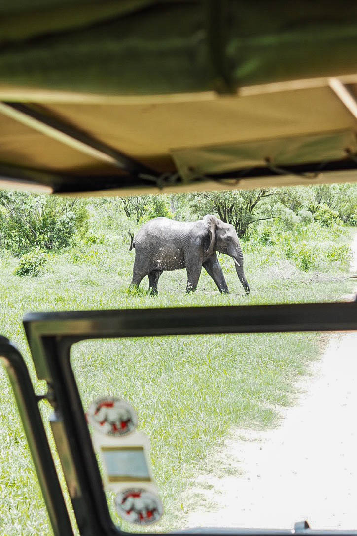 Elephant seen from safari vehicle