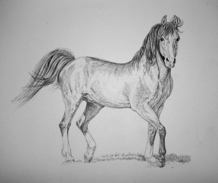 Original Black and white drawing Horse 2  |Horse Art Drawings