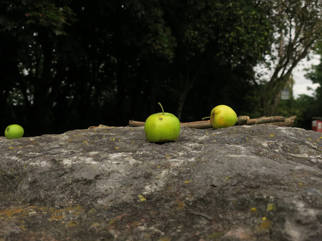 One apple in focus, the others not, on a rock, in front of trees.