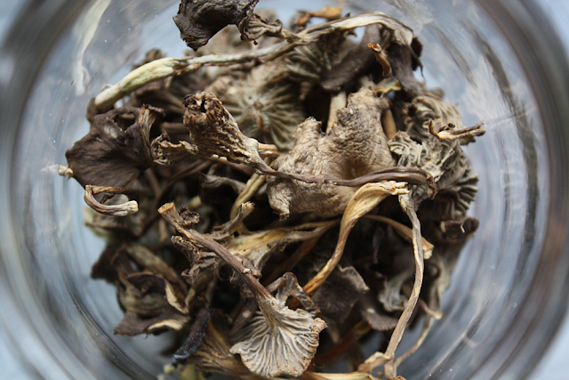 Dried chanterelles after 48 hours on the bathroom floor, without floor heat