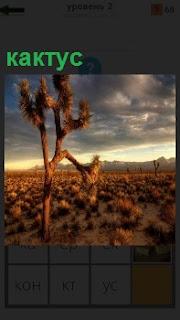 В пустыне стоит в сумерках одинокий кактус и вдали видны холмы небольшие