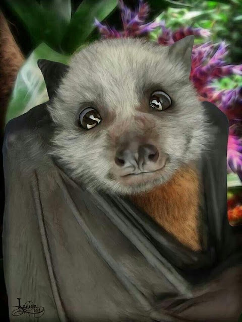 Bats can honestly be very cute