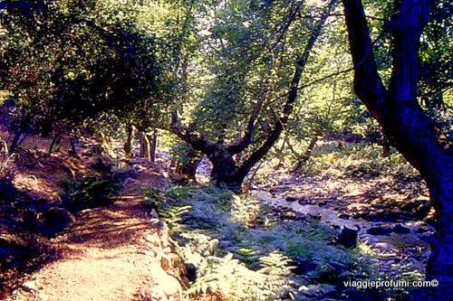 Therma, Samotracia: la selva