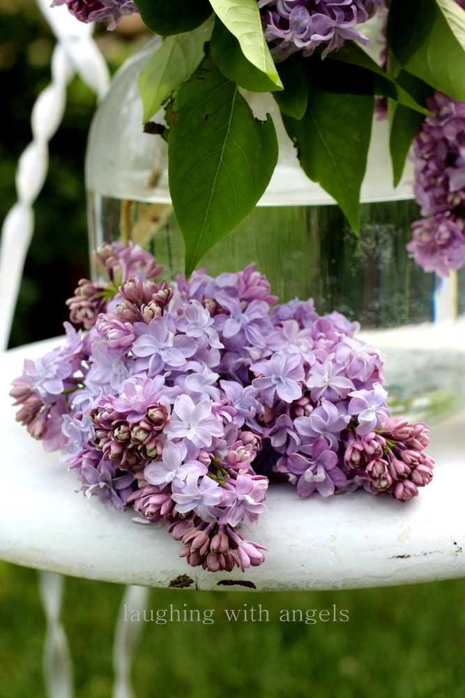 1000 Images About Lilacs On Pinterest Lilacs Lilac