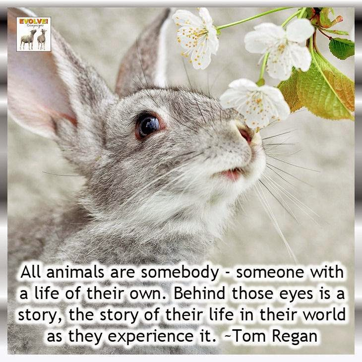 We Re All Animals Words Of Wisdom