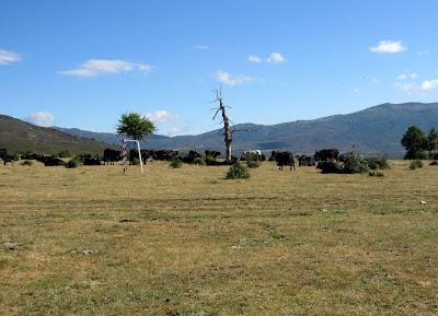 Campo de fútbol y vacas. Pueblos Arquitectura Negra