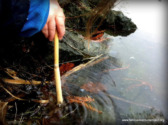 Blowing pond bubbles with straws made from reeds