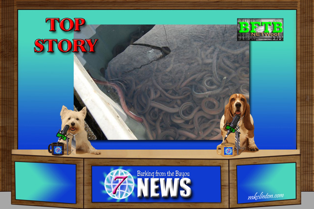 BFTB NETWoof News Top Story of an eel spill in Oregon