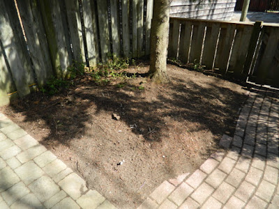 Toronto Riverdale Backyard Spring Cleanup After by Paul Jung Gardening Services--a Toronto Organic Gardener